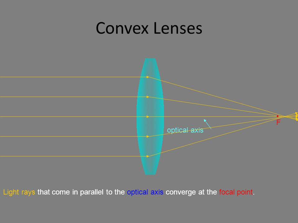 Convex Lenses optical axis Light rays that come in parallel to the optical axis converge at the focal point.