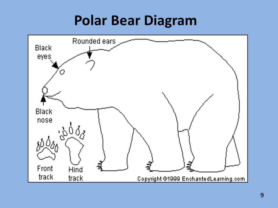 slide_12 polar bear diagram wiring diagram all data