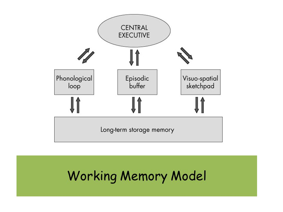 Working Memory And Case Studies Working Memory Model Ppt Download