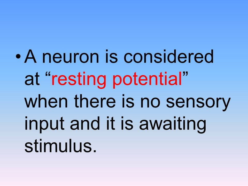 A neuron is considered at resting potential when there is no sensory input and it is awaiting stimulus.