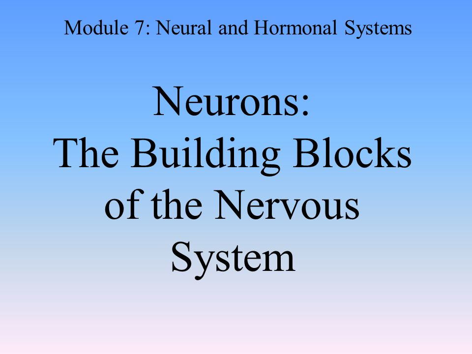Neurons: The Building Blocks of the Nervous System Module 7: Neural and Hormonal Systems