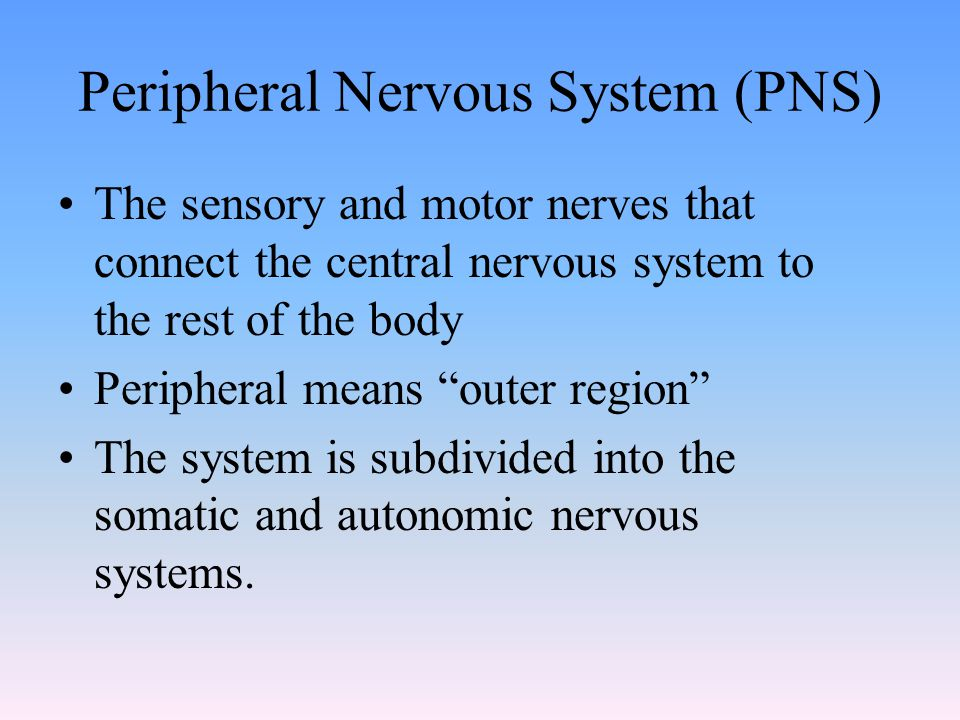 Peripheral Nervous System (PNS) The sensory and motor nerves that connect the central nervous system to the rest of the body Peripheral means outer region The system is subdivided into the somatic and autonomic nervous systems.