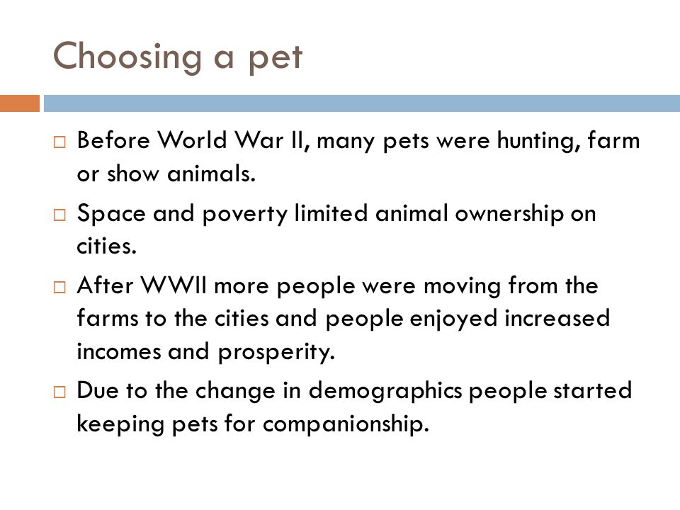 SMALL ANIMALS AS PETS  Objectives  List the questions a person