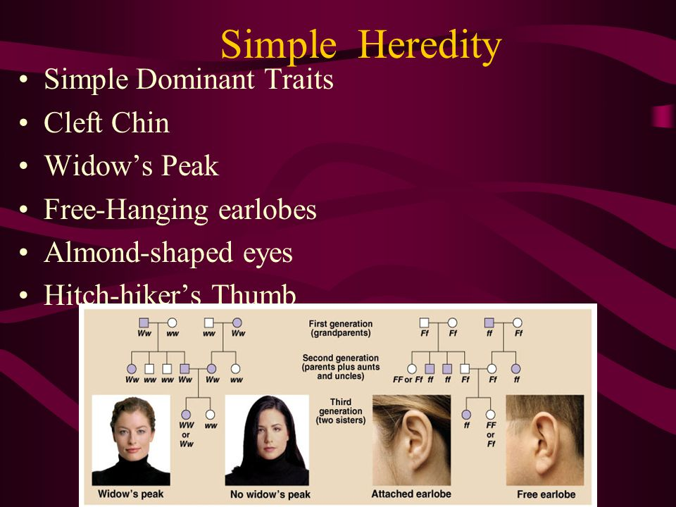 Simple Heredity Simple Dominant Traits Cleft Chin Widow's Peak Free-Hanging earlobes Almond-shaped eyes Hitch-hiker's Thumb
