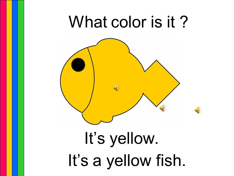 It's yellow. What color is it It's a yellow dog.