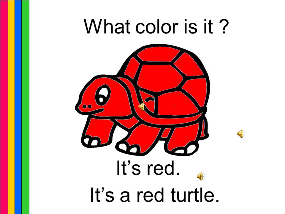 Q ︰ What color is it ( 這是什麼顏色 ) A ︰ It's ____. ( 它是 ___ 顏色 ) ※ It's=It is 的縮寫 Topic sentences