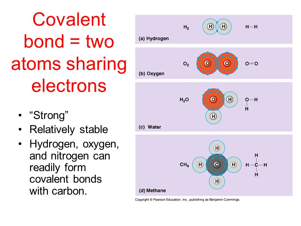 Covalent bond = two atoms sharing electrons Strong Relatively stable Hydrogen, oxygen, and nitrogen can readily form covalent bonds with carbon.