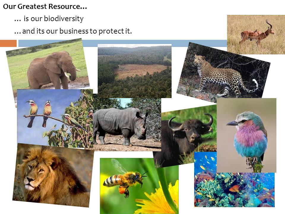 Our Greatest Resource… … is our biodiversity …and its our business to protect it.