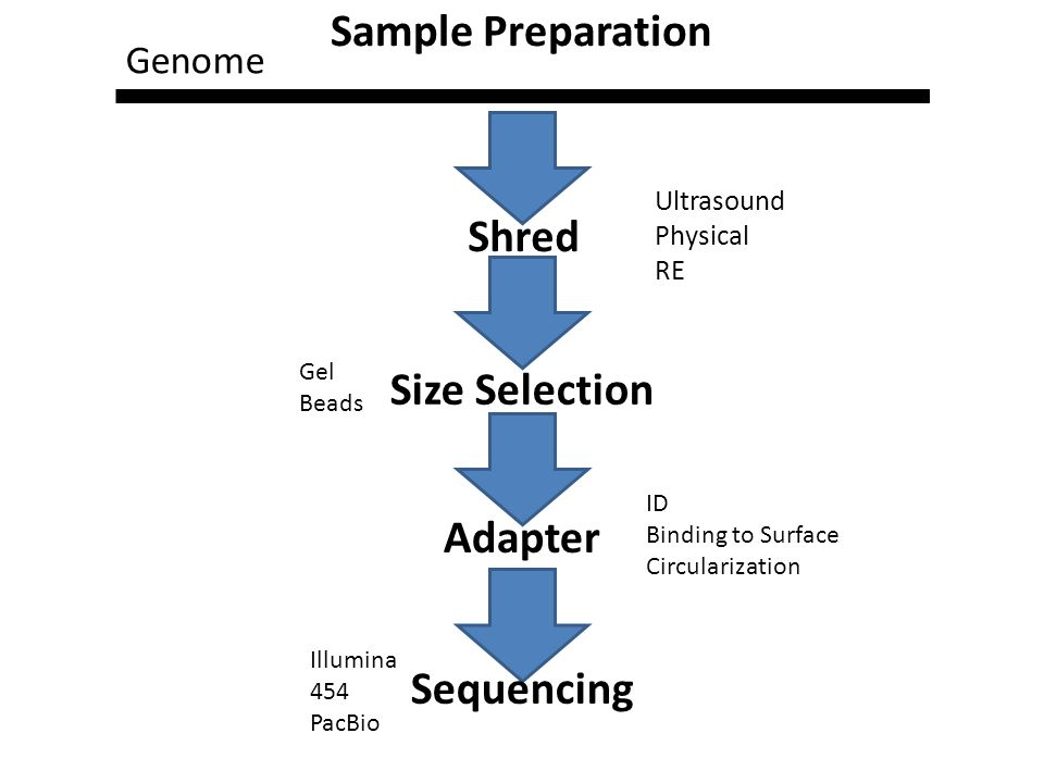 Shred Size Selection Adapter Sequencing Genome Ultrasound Physical RE Gel Beads ID Binding to Surface Circularization Illumina 454 PacBio Sample Preparation