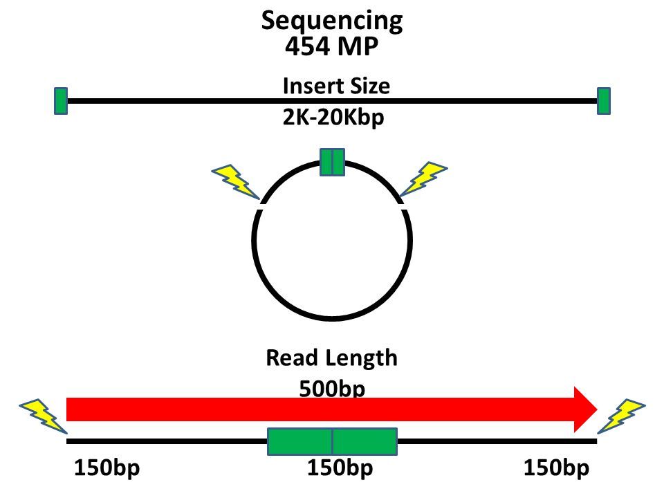 Insert Size 2K-20Kbp Read Length 500bp 454 MP 150bp Sequencing