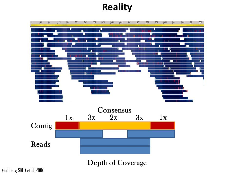 Goldberg SMD et al x 3x2x 3x 1x Consensus Reads Contig Depth of Coverage Reality