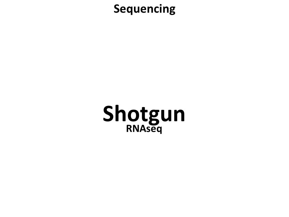 Sequencing Shotgun RNAseq