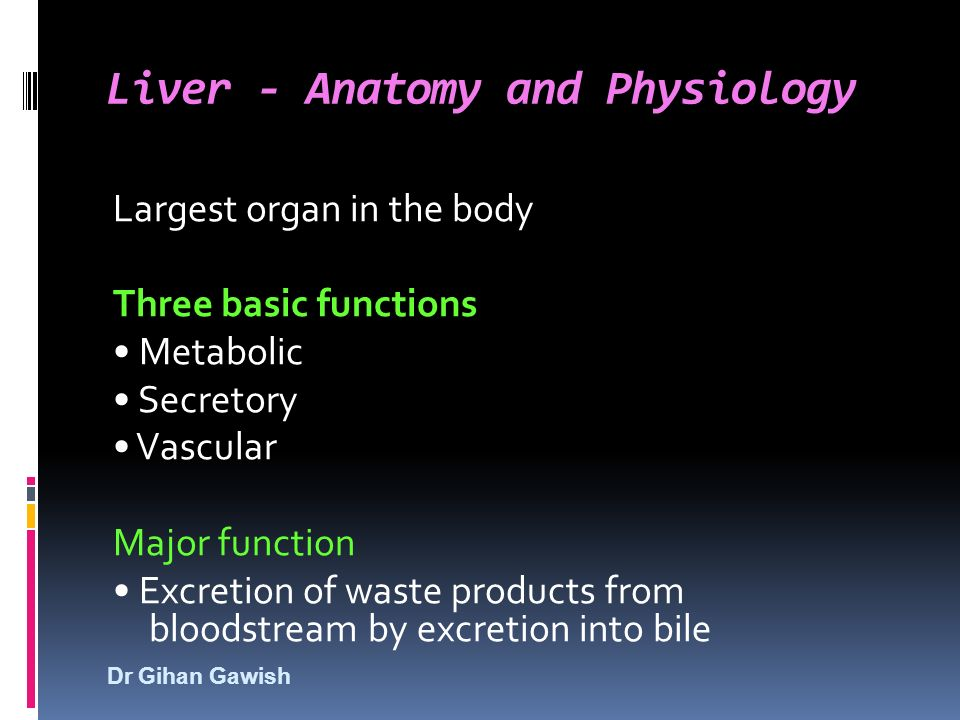 Dr Gihan Gawish Liver Anatomy And Physiology Largest Organ In The