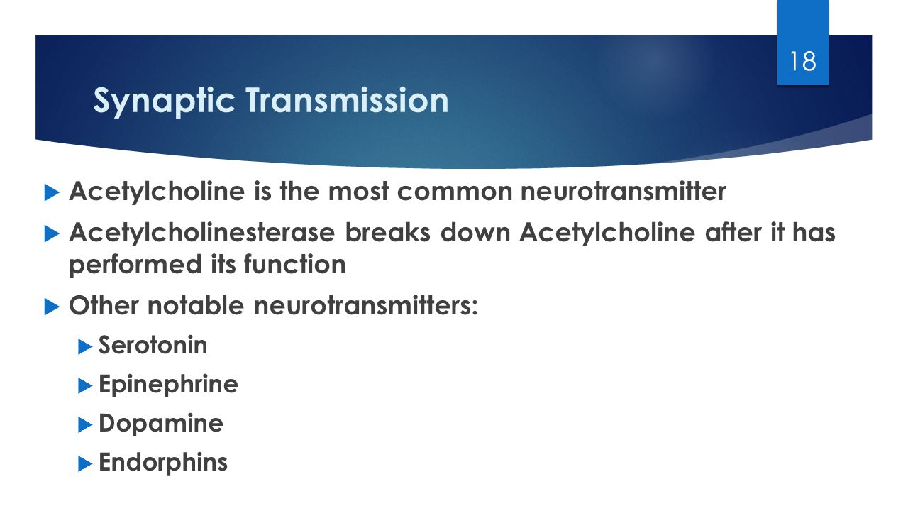 Synaptic Transmission  Acetylcholine is the most common neurotransmitter  Acetylcholinesterase breaks down Acetylcholine after it has performed its function  Other notable neurotransmitters:  Serotonin  Epinephrine  Dopamine  Endorphins 18