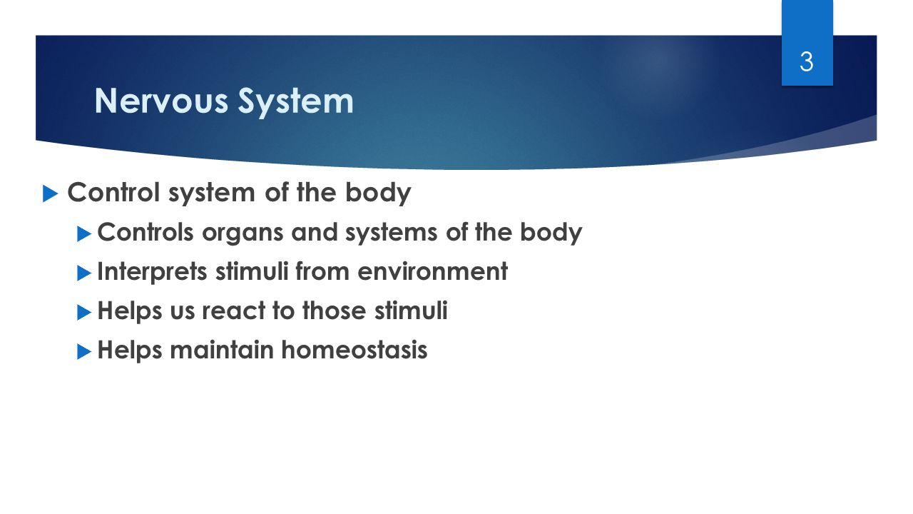 Nervous System  Control system of the body  Controls organs and systems of the body  Interprets stimuli from environment  Helps us react to those stimuli  Helps maintain homeostasis 3