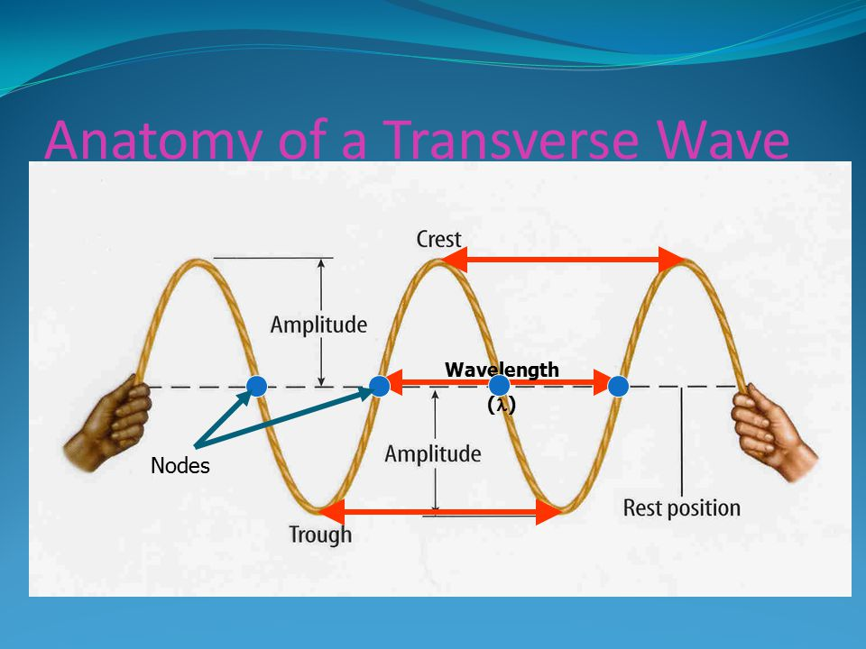 Anatomy of a Transverse Wave Wavelength ( ) Nodes