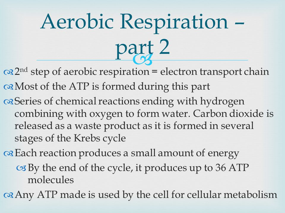   2 nd step of aerobic respiration = electron transport chain  Most of the ATP is formed during this part  Series of chemical reactions ending with hydrogen combining with oxygen to form water.