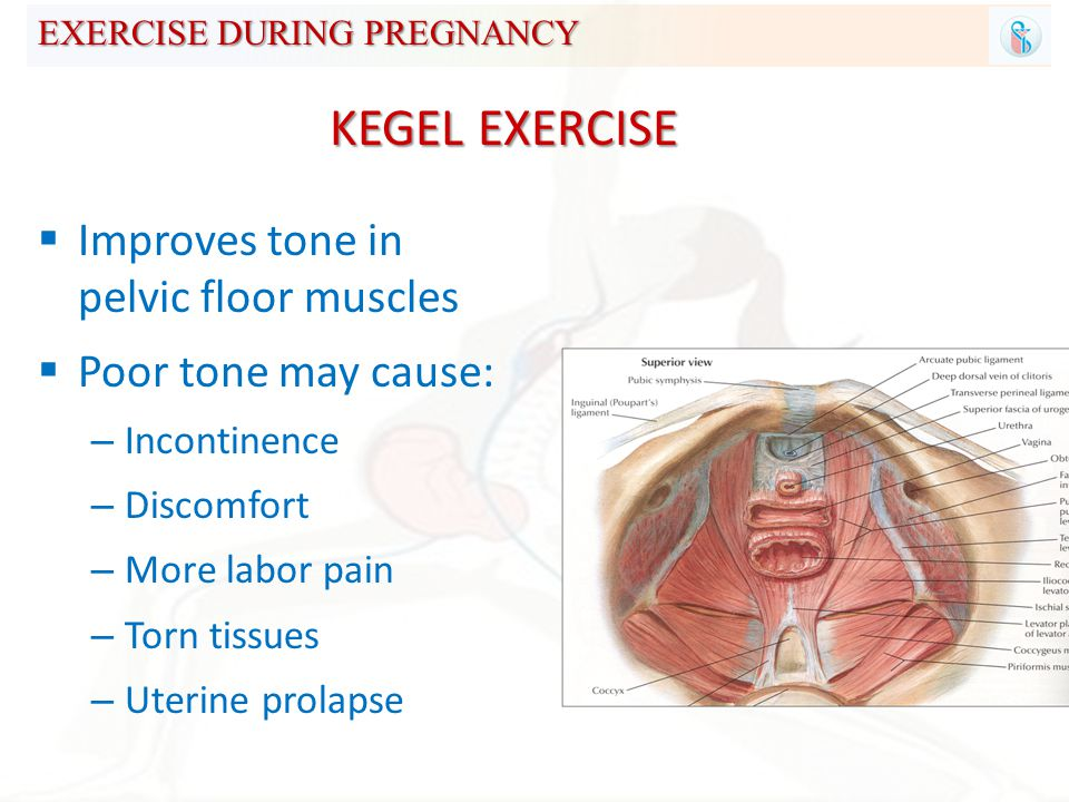 71 EXERCISE DURING PREGNANCY  Improves tone in pelvic floor muscles  Poor tone may cause: – Incontinence – Discomfort – More labor pain – Torn tissues ...