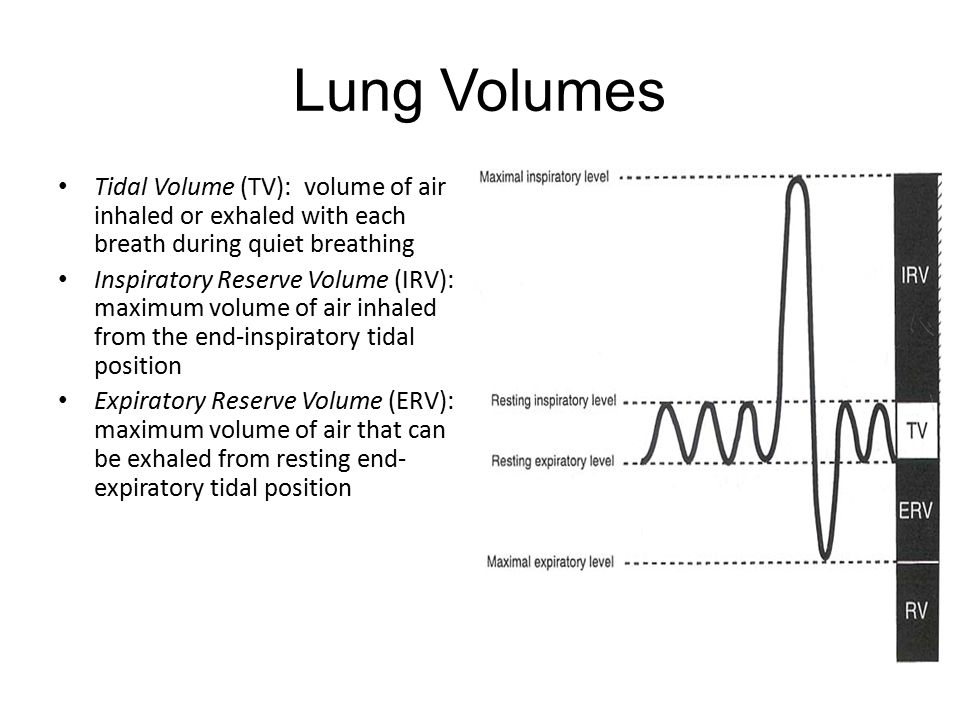 Lung Volumes Tidal Volume (TV): volume of air inhaled or exhaled with each breath during quiet breathing Inspiratory Reserve Volume (IRV): maximum volume of air inhaled from the end-inspiratory tidal position Expiratory Reserve Volume (ERV): maximum volume of air that can be exhaled from resting end- expiratory tidal position