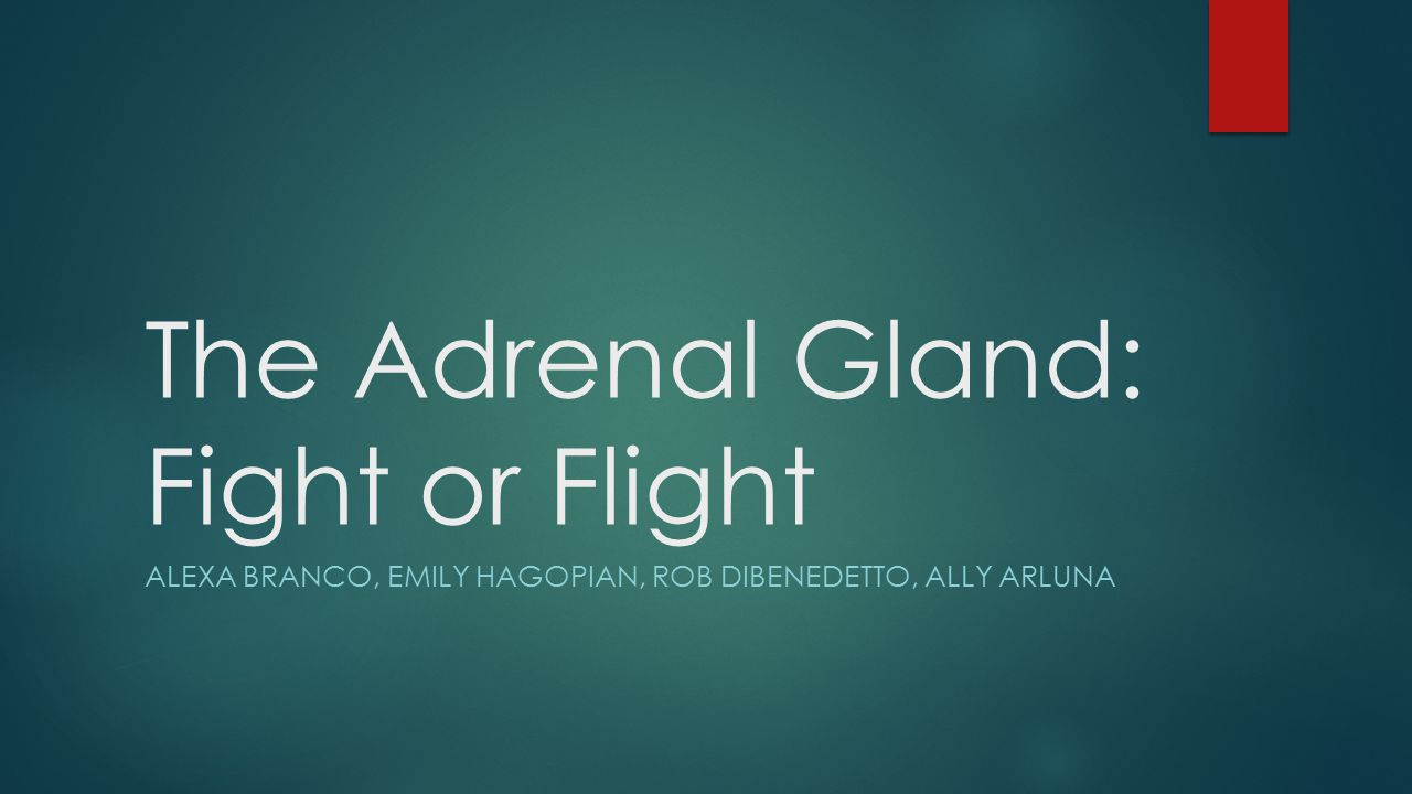 The Adrenal Gland: Fight or Flight ALEXA BRANCO, EMILY HAGOPIAN, ROB DIBENEDETTO, ALLY ARLUNA