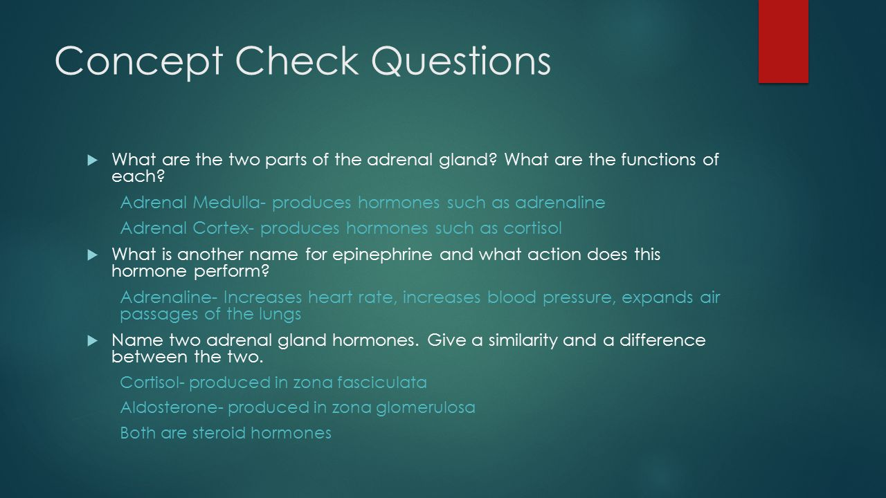 Concept Check Questions  What are the two parts of the adrenal gland.