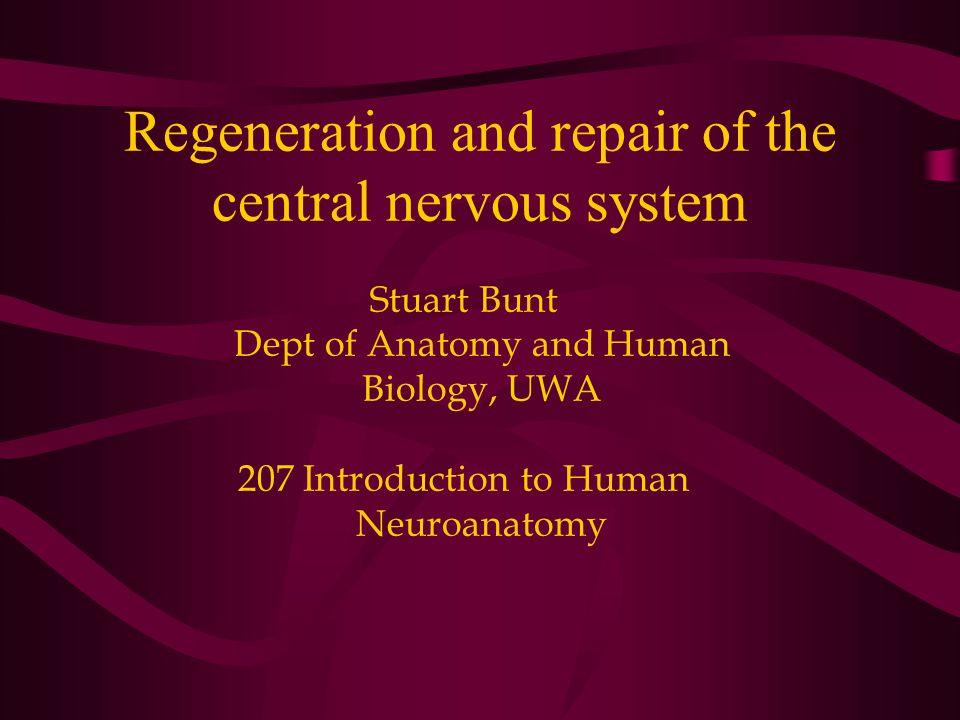 an introduction to the central nervous system An introduction to your nervous system if you are already familiar with general workings of the human nervous system, you can skip ahead to neurons, neural networks and neural pathways nicotine addiction is caused by nicotine hijacking your nervous system.