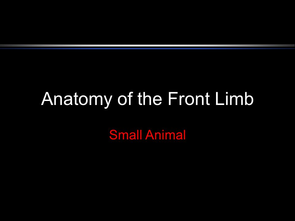 Anatomy Of The Front Limb Small Animal Anatomy Of The Front Leg