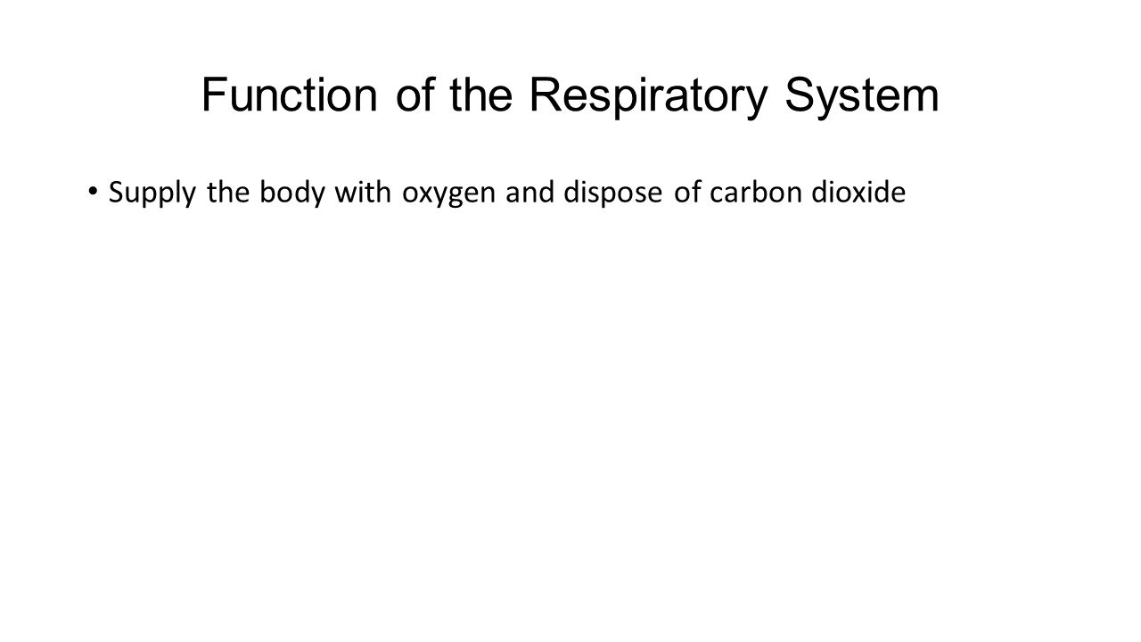 Function of the Respiratory System Supply the body with oxygen and dispose of carbon dioxide