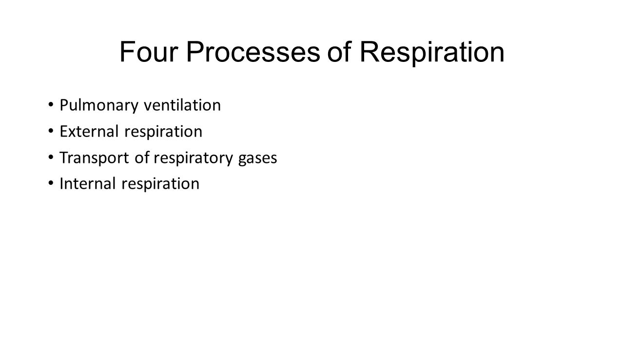 Four Processes of Respiration Pulmonary ventilation External respiration Transport of respiratory gases Internal respiration