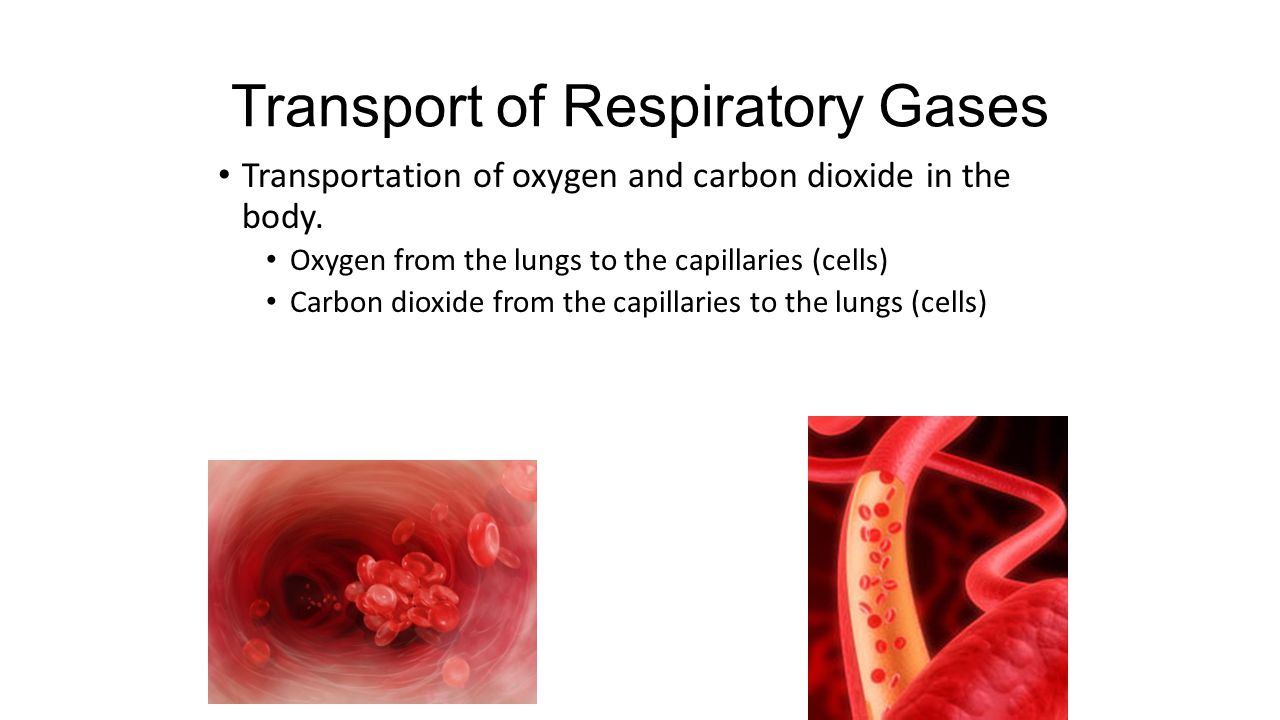 Transport of Respiratory Gases Transportation of oxygen and carbon dioxide in the body.
