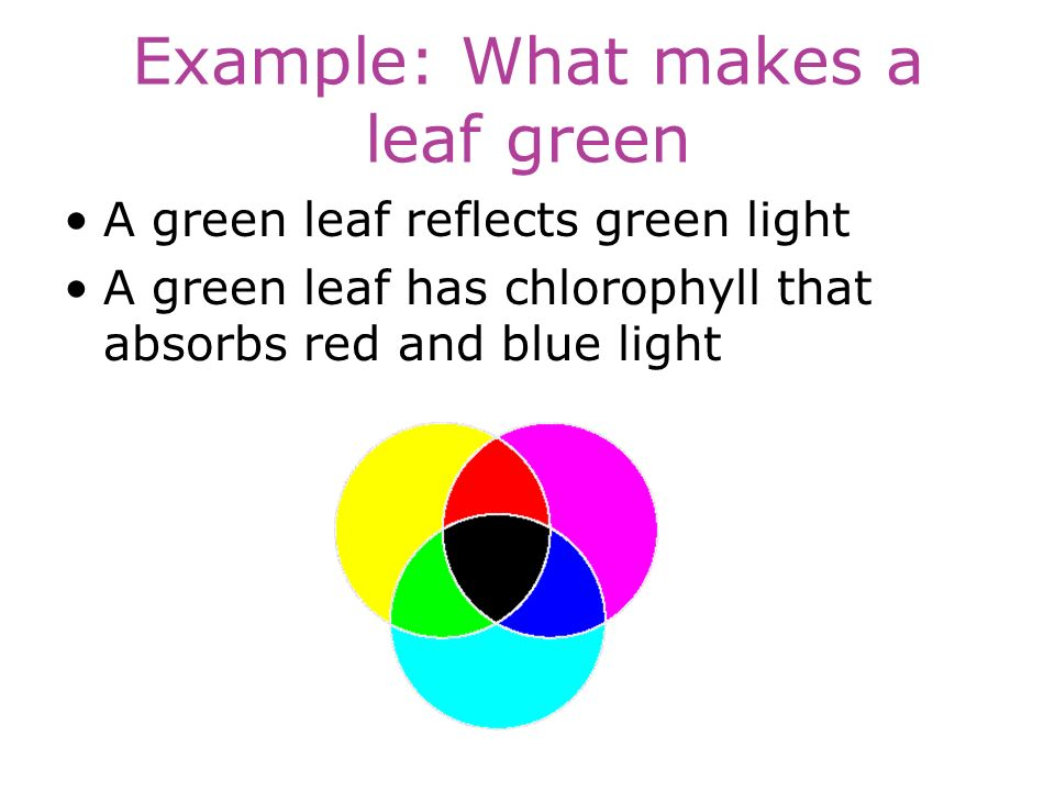 Example: What makes a leaf green A green leaf reflects green light A green leaf has chlorophyll that absorbs red and blue light