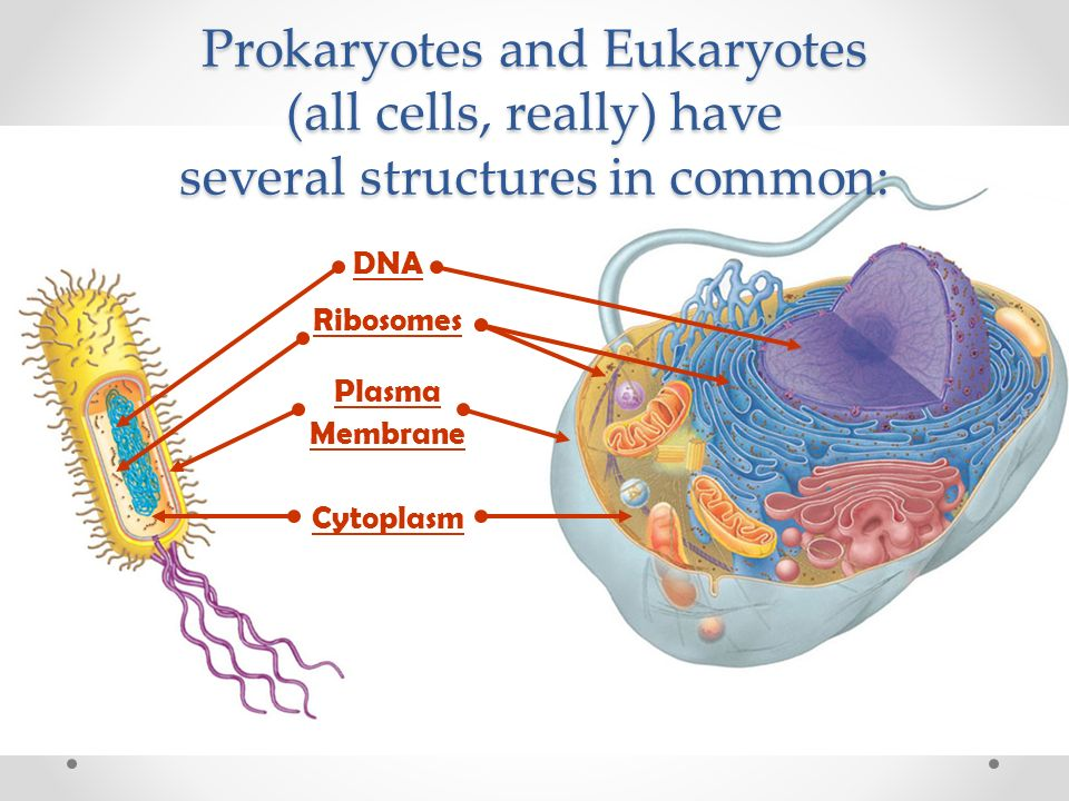 prokaryotes eukaryotes and viruses Types of nucleic acid, capsid symmetry, presence or absence of envelope, size,type of infection caused, and type of host infected are ways to classify.