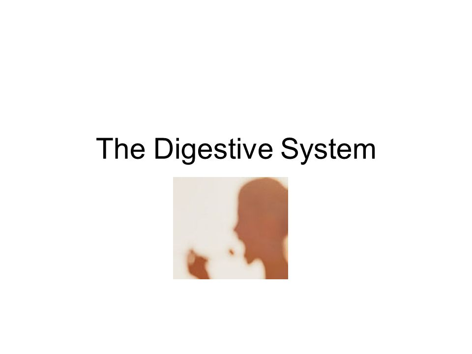 The Digestive System Diagram Of The Digestive System Ppt Download