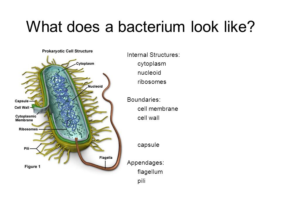 The World of Bacteria. What do...