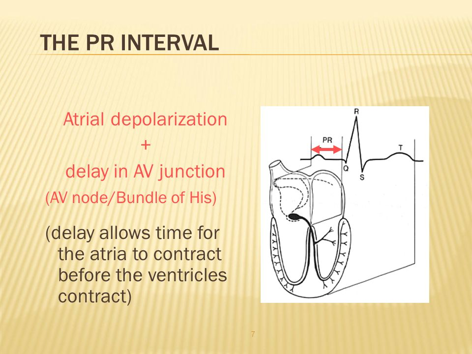 THE PR INTERVAL Atrial depolarization + delay in AV junction (AV node/Bundle of His) (delay allows time for the atria to contract before the ventricles contract) 7
