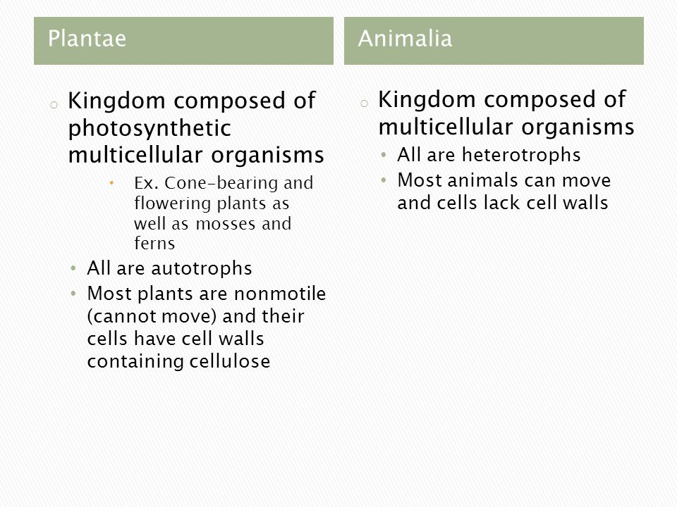 PlantaeAnimalia o Kingdom composed of photosynthetic multicellular organisms  Ex.