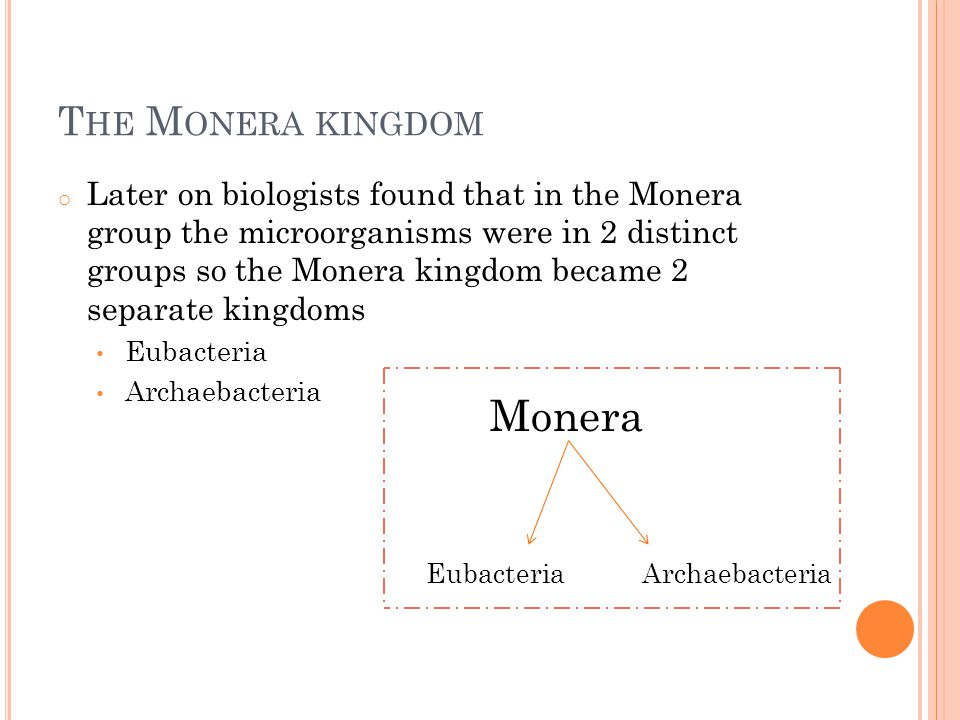 T HE M ONERA KINGDOM o Later on biologists found that in the Monera group the microorganisms were in 2 distinct groups so the Monera kingdom became 2 separate kingdoms Eubacteria Archaebacteria Monera EubacteriaArchaebacteria