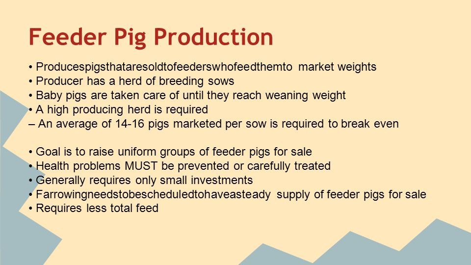 swine production Succeed in your swine production business with help from nor-ag ltd in red deer, ab we offer automated sow feeding systems to make your process easier.