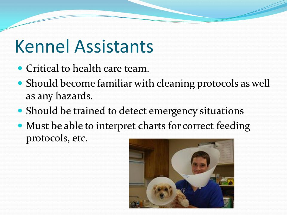 Kennel Assistants Critical to health care team.