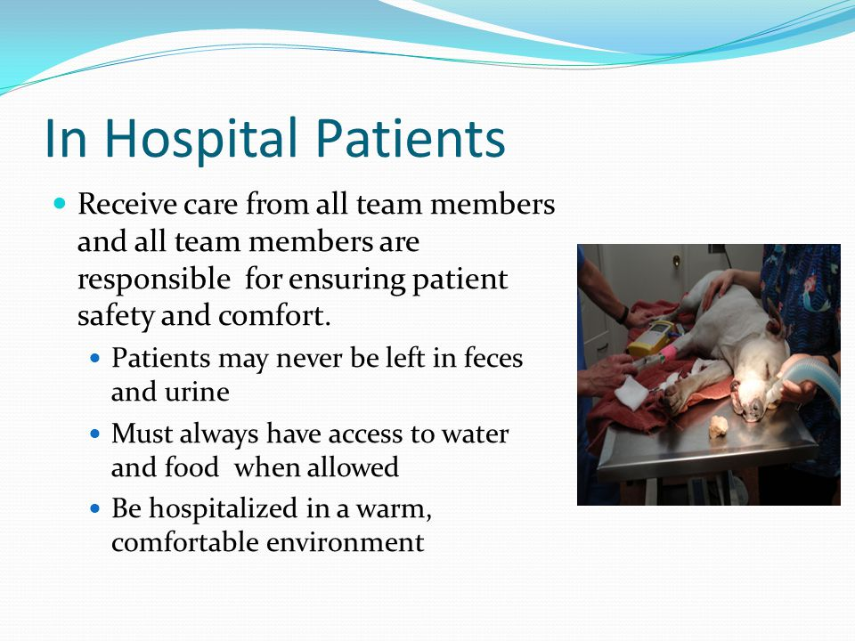 In Hospital Patients Receive care from all team members and all team members are responsible for ensuring patient safety and comfort.
