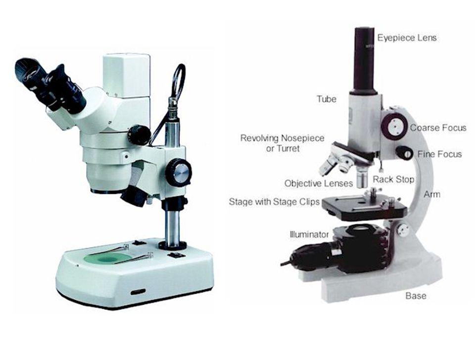 compound electron microscope