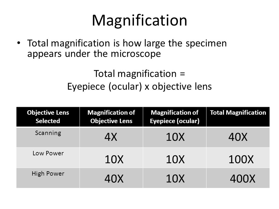Microscopes Magnification, Field of View and Estimating Size