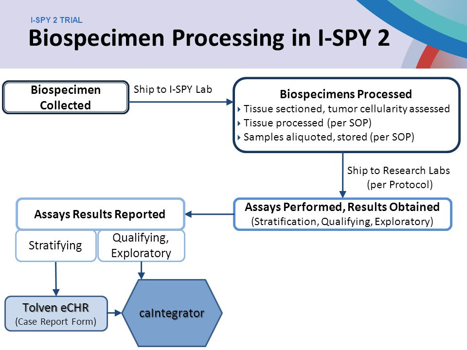 Informatics in Breast Cancer Research I-SPY 2 TRIAL