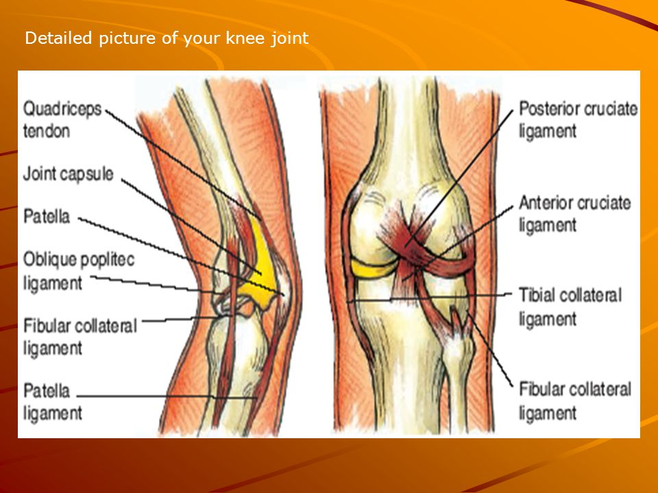 Detailed picture of your knee joint. Collateral ligaments The ...