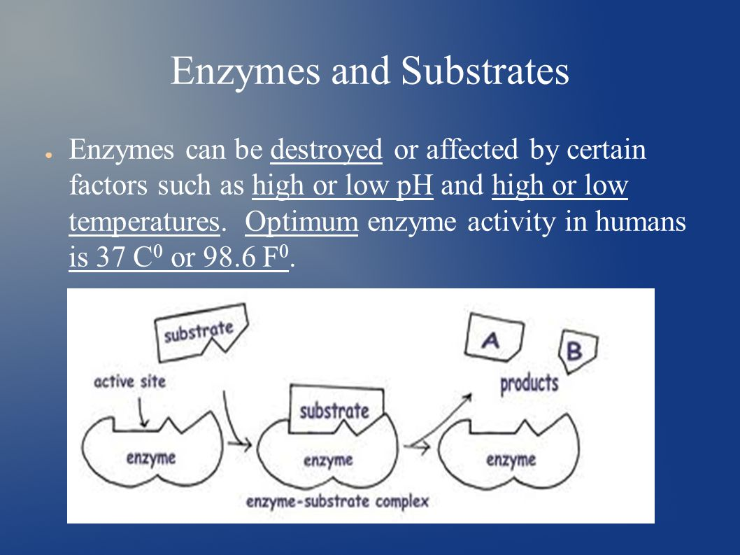 Enzymes and Substrates ● Enzymes can be destroyed or affected by certain factors such as high or low pH and high or low temperatures.
