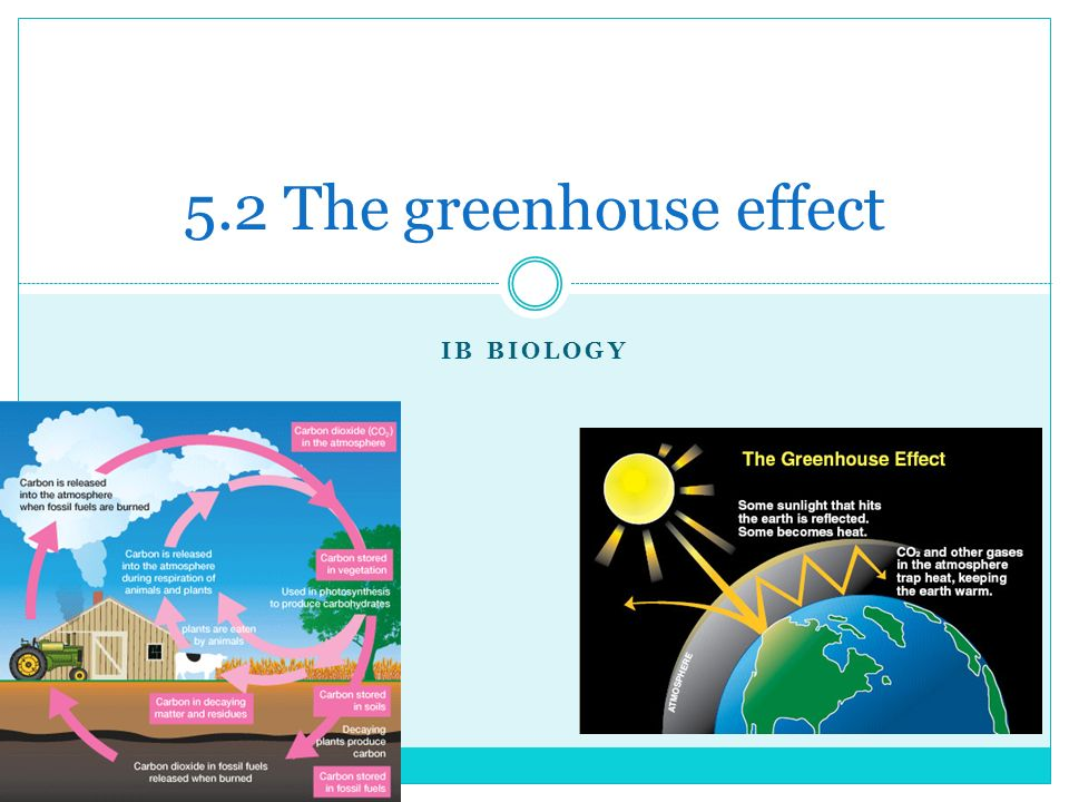 Ib biology 52 the greenhouse effect the carbon cycle carbon exists 1 ib biology 52 the greenhouse effect ccuart Choice Image