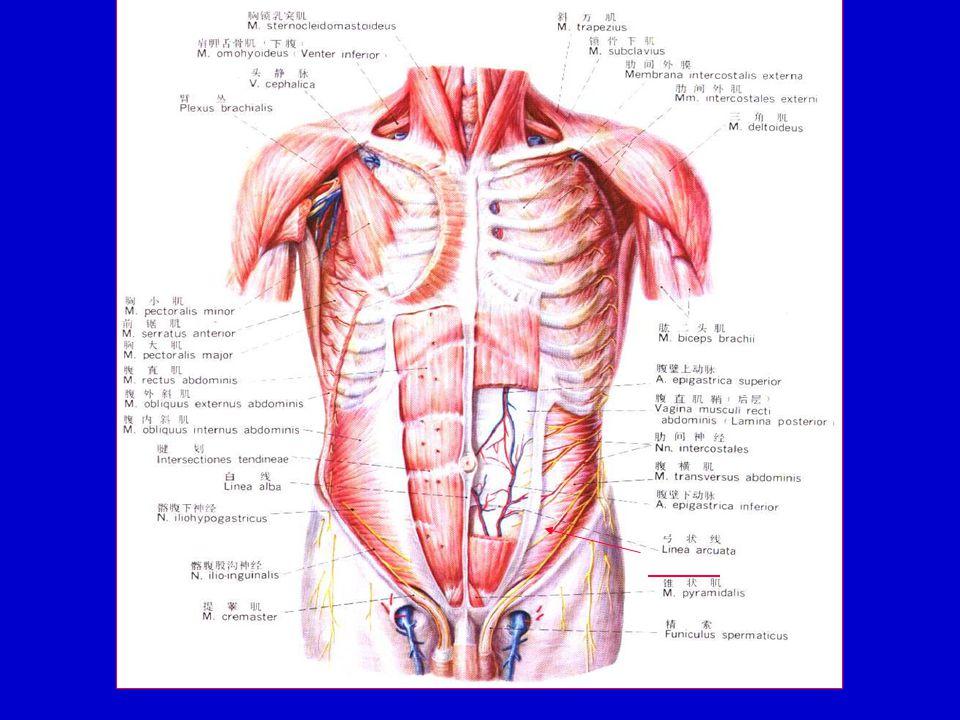Department of Human Anatom School of Medicine of Zhejiang University ...