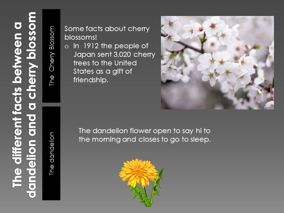 Some Fun Facts Flowers Are Associated With The Different Purposes