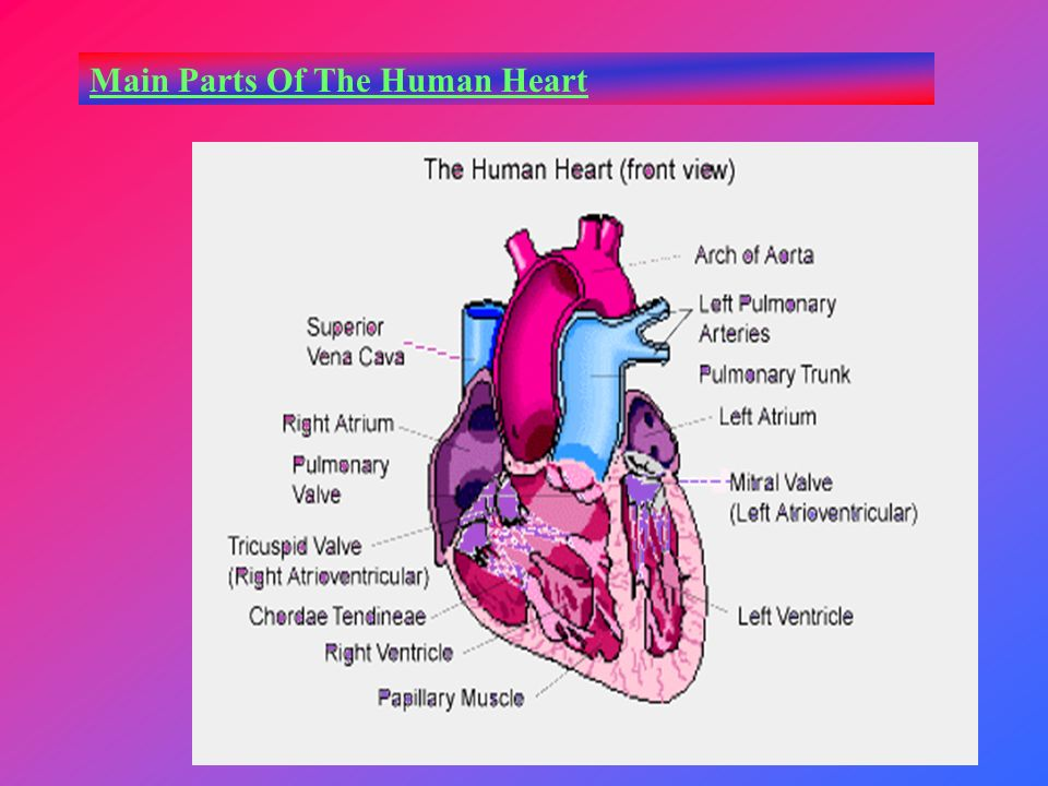 Welcome Objectives To Know The Role Played The Human Heart In