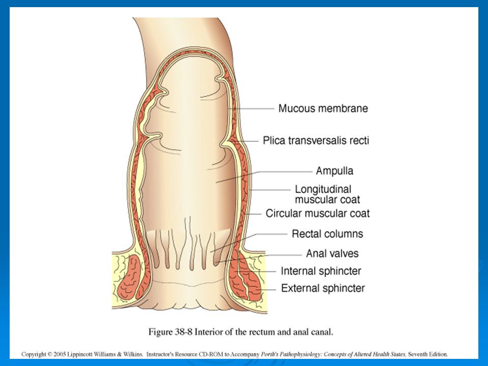 Diseases Of Rectum And Anal Canal Ppt Video Online Download